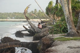 海岸浸食によって倒れるヤシの木